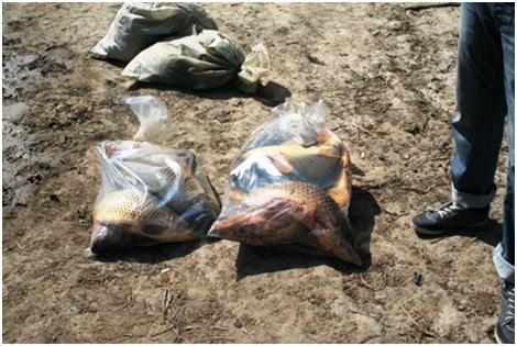 Poliţiştii de frontieră au întocmit persoanelor în cauză dosare penale